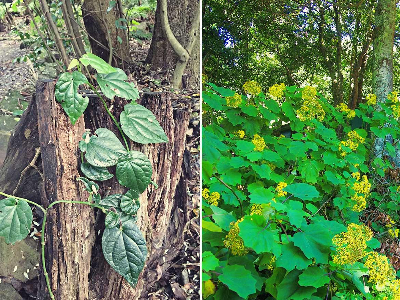 Australian native bushland has the most amazing flora.